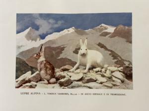 Fauna alpina 1