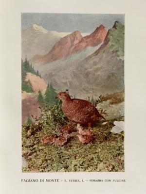 Fauna alpina 2